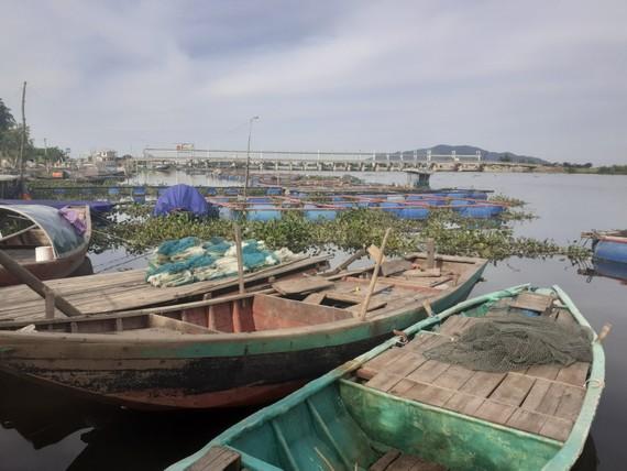 Khu vực cá nuôi trong lồng bè bị chết trên sông ở huyện Thạch Hà, tỉnh Hà Tĩnh