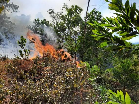 Nắng nóng, gió thổi mạnh, thực bì dày... khiến đám cháy bùng phát trở lại  trên dãy núi Mồng Gà