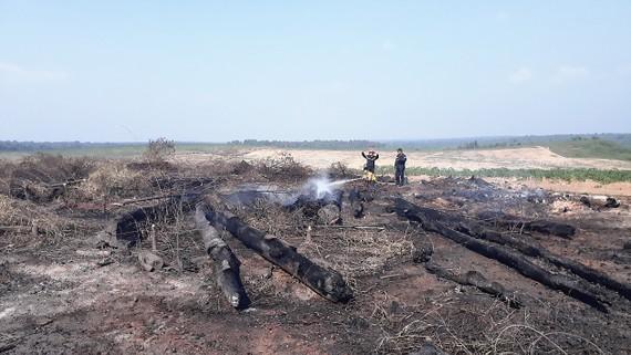 Những ngày đầu năm 2018, gỗ khai thác đã 2 lần bị cháy