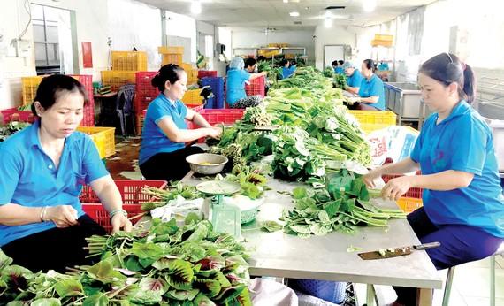 Các HTX đầu tư nâng cấp nhà sơ chế hiện đại nhằm đảm bảo vệ sinh an toàn thực phẩm Ảnh: CAO THĂNG