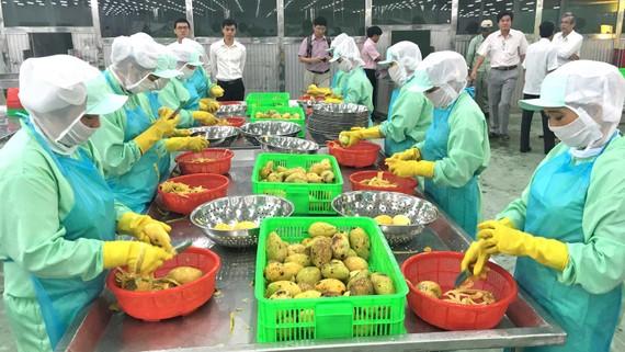 Xoài Việt Nam đã thâm nhập được vào thị trường Trung Quốc