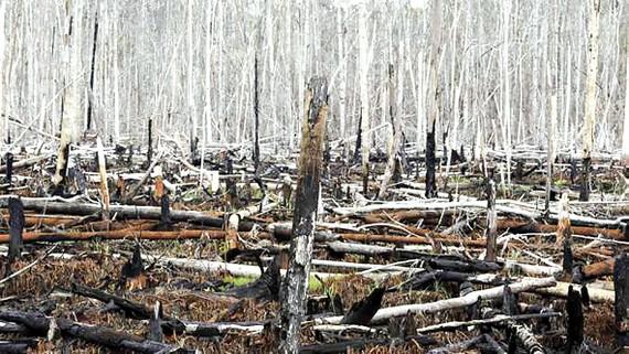 Phá rừng được xem là một trong các nguyên nhân chính  gây biến đổi khí hậu