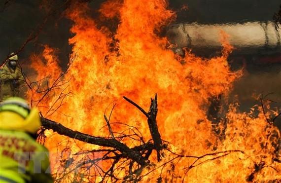 Các đám cháy rừng bùng phát dữ dội tại New South Wales, Australia. Ảnh: TTXVN