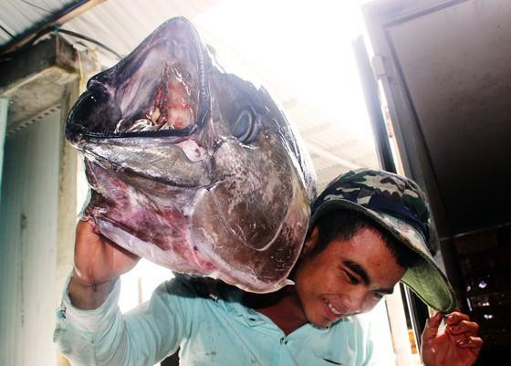 Ngư dân trẻ với niềm vui câu được cá bò gù