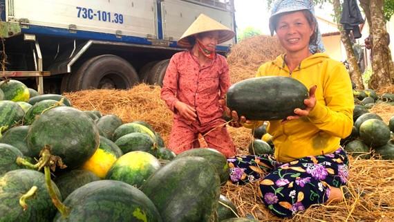 Miền Trung: Nông sản được mùa, được giá