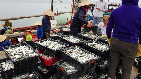 Bộ NN-PTNT đã ký công văn gửi UBND các tỉnh, thành phố ven biển đề nghị động viên ngư dân bám biển sản xuất bình thường trong phạm vi vùng biển của Việt Nam