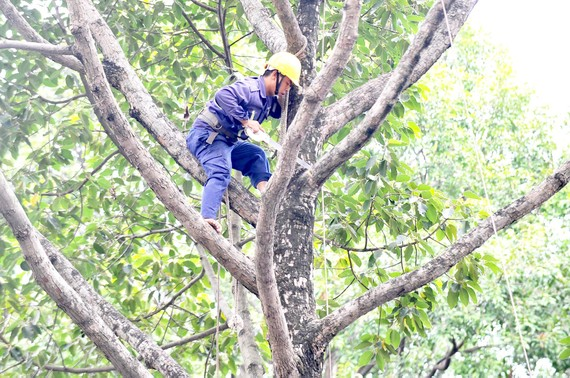 Kiểm tra, cắt tỉa cây xanh trên toàn TPHCM