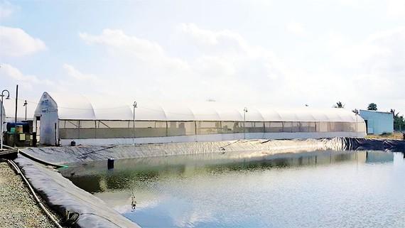 Mô hình BIOSIPEC của ADM - giải pháp nuôi tôm  thâm canh tiết kiệm nước và bền vững