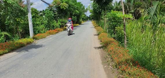 Các tuyến đường được trồng hoa ở xã Đa Phước, huyện Bình Chánh