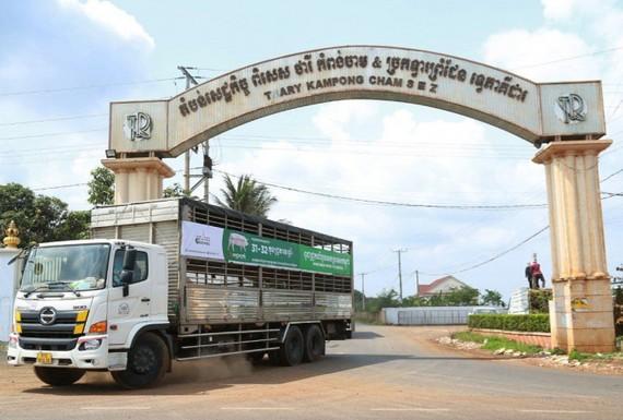 Hướng tới xuất khẩu chính ngạch gia súc, gia cầm
