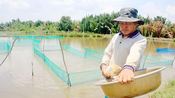 Ông Phong cho cá cảnh ăn