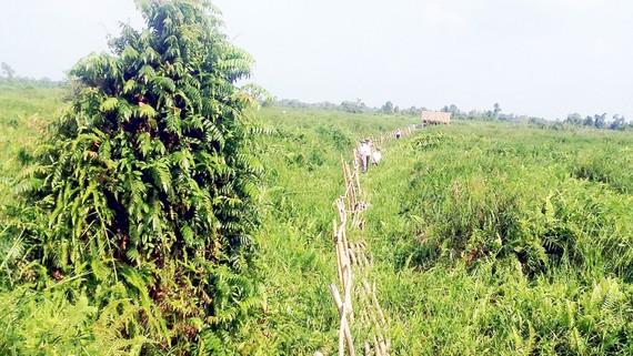 """Một góc Vườn quốc gia U Minh Thượng - """"lá phổi xanh"""" của ĐBSCL"""