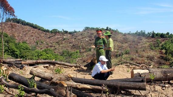 Hiện trường vụ gần 61 ha rừng tự nhiên bị xóa sổ tại huyện An Lão (Bình Định)