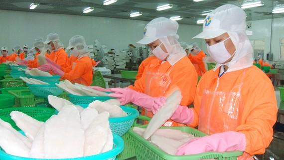 Chế biến cá tra xuất khẩu ở An Giang. Ảnh: HUỲNH LỢI