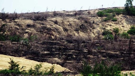 Hàng trăm ha rừng giữ chức năng phòng hộ cho hàng ngàn người dân xã Phước Hòa (huyện Tuy Phước) và Cát Chánh (huyện Phù Cát) đã bị phá sạch, đốt sạch