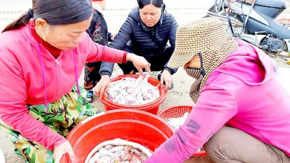Hà Tĩnh: Ngư dân trúng mùa cá khoai