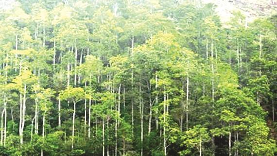 Gần 270.000ha rừng Việt Nam đã có chứng chỉ quốc tế