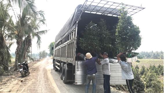 Các tuyến đường nội đồng được xây dựng, mở rộng để xe tải lớn vào tận nơi vận chuyển