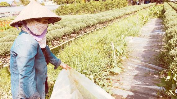 Nông dân ĐBSCL lo lắng trước tình trạng mặn xâm nhập. Ảnh: TÍN HUY