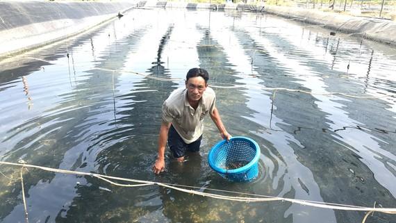 Nông dân huyện Cần Giờ tăng thu nhập nhờ nuôi ốc hương
