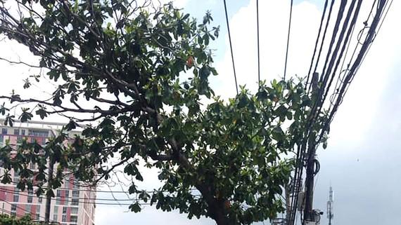 Chăm sóc cây xanh phát triển an toàn