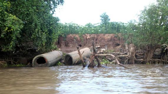 Một đoạn sạt lở dọc theo sông Hậu