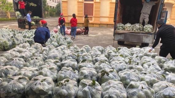 Ổi Thanh Hà, tỉnh Hải Dương chuẩn bị được chở lên Hà Nội tiêu thụ thông qua các nhóm thiện nguyện. Ảnh: HƯƠNG GIANG