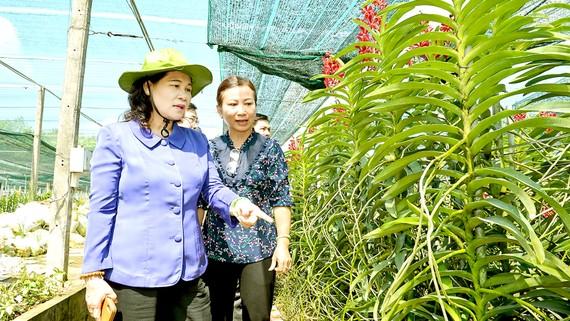Đồng chí Nguyễn Thị Lệ trong chuyến khảo sát hoạt động nông nghiệp tại huyện Củ Chi. Ảnh: VIỆT DŨNG