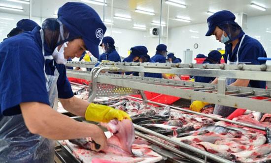 Chế biến cá tra xuất khẩu vào thị trường Hoa Kỳ.