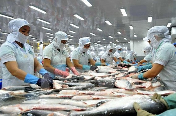 Cá tra Việt Nam vẫn có nhiều cơ hội xuất khẩu sang Ấn Độ, EU, Mỹ.