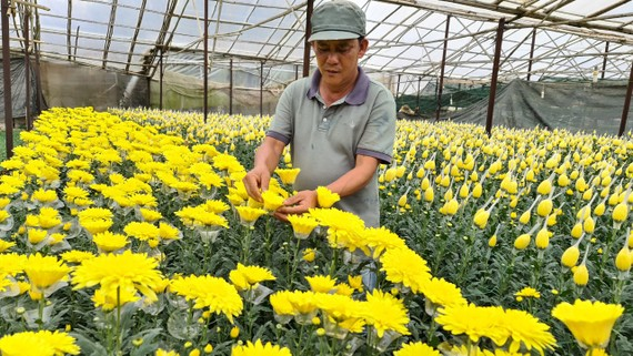Sở Công thương TPHCM nói gì về đề nghị mở lại chợ hoa Đầm Sen của Lâm Đồng?