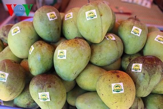 Son La mangoes exported to demanding markets