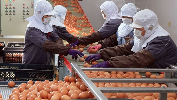 Workers wearing face masks sort and package eggs at a factory in China's Shandong Province on Feb. 18.   © Reuters