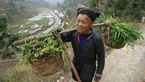 Một nông dân ở tỉnh Quý Châu của Trung Quốc. Ảnh: AFP