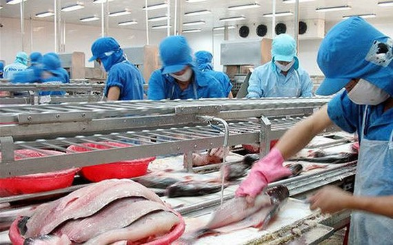 Seafood processing at VHC.