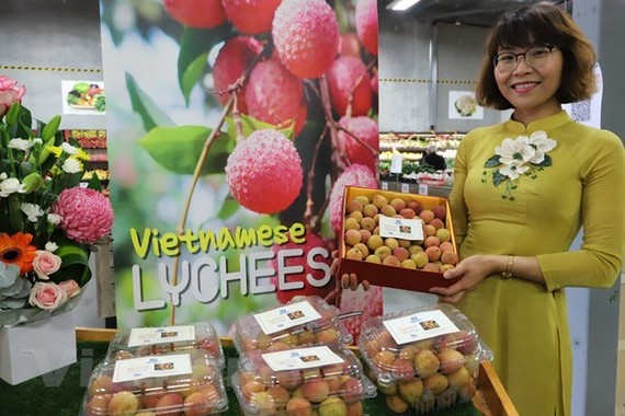 One kilo of Vietnamese fresh lychees was sold for 3,000 AUD (US$2,254) at a special auction in Pert city of West Australia. — VNA/VNS Photo