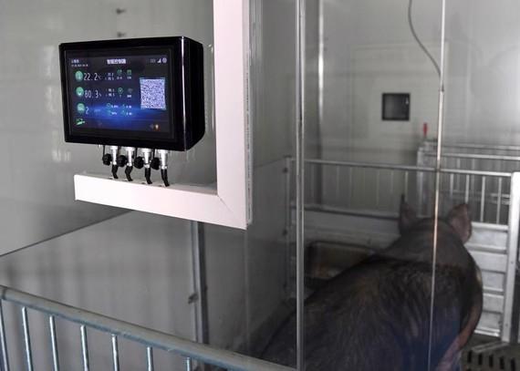 Thiết bị kiểm soát nhiệt độ và độ ẩm tại một trang trại lợn ở Chiết Giang, Trung Quốc - Ảnh: Getty/Bloomberg.
