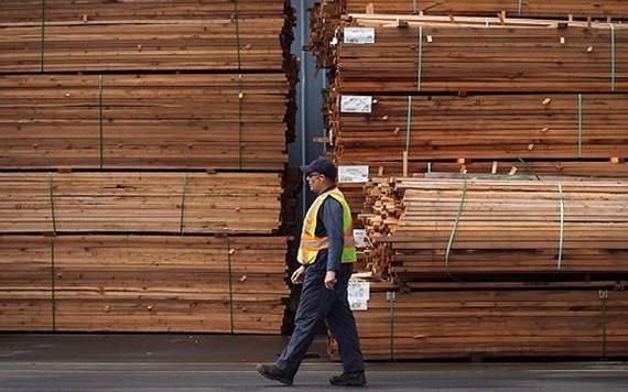 Bộ Thương mại Mỹ áp thêm thuế chống phá giá với gỗ mềm Canada (Ảnh: Canadian Press)