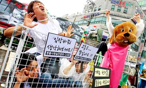 Người Hàn Quốc thay đổi thói quen ăn thịt chó
