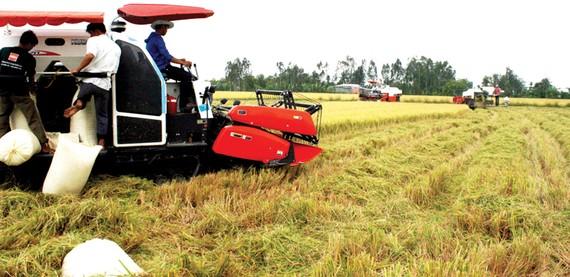 Thu hoạch lúa tại ĐBSCL