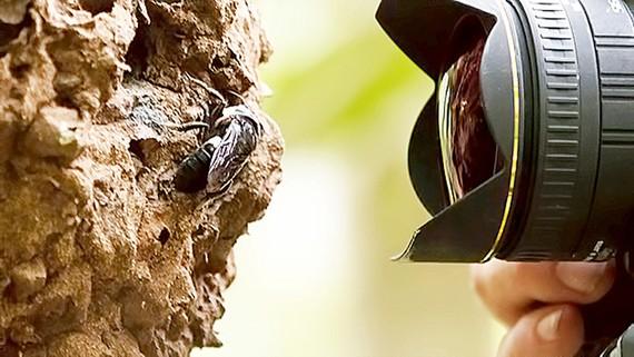 Phát hiện loài ong bị xem là tuyệt chủng