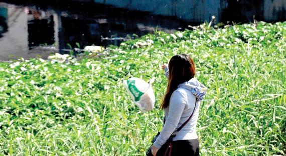 Vứt rác xuống kênh, rạch sẽ gây tắc nghẽn dòng chảy                                                         Ảnh: THÀNH TRÍ