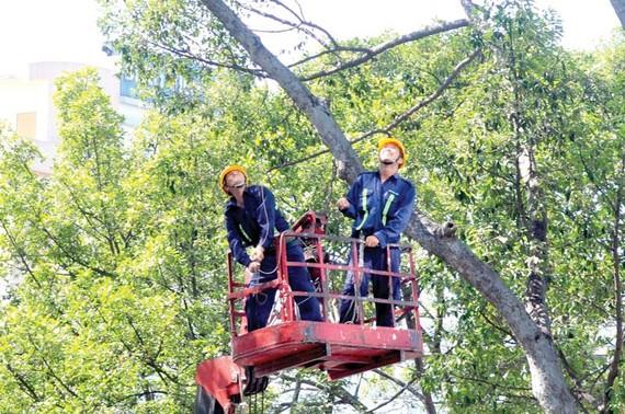 Mé nhánh cây xanh tại quận 3, TPHCM  Ảnh: THÀNH TRÍ