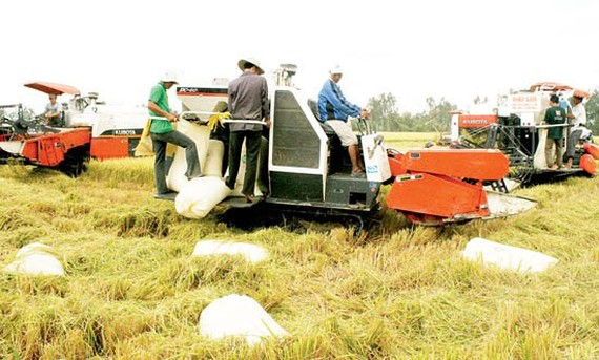 Thu hoạch lúa ở Đồng bằng sông Cửu Long