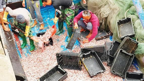 Nhiều ngư dân trúng đậm mẻ cá biển cuối năm