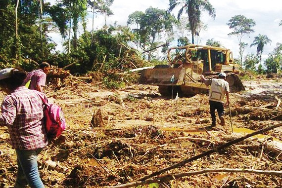 Rừng Amazon bị tàn phá nhanh