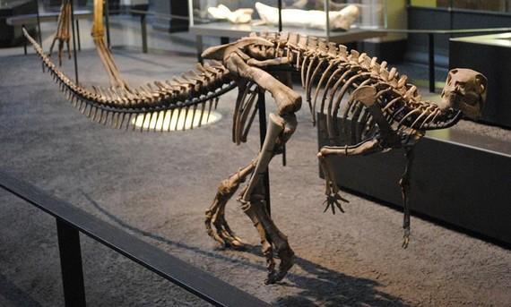 Phát hiện hóa thạch khủng long chân chim mới