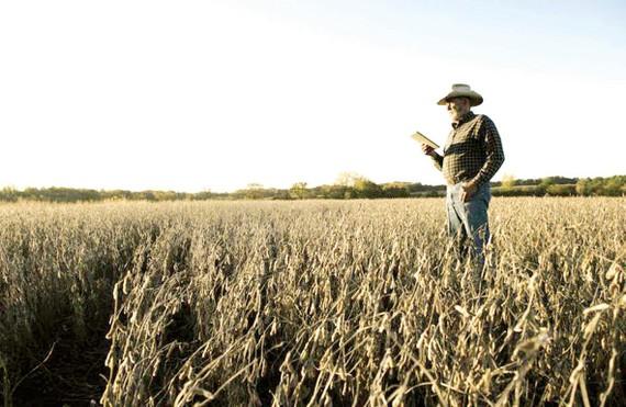 Nông dân Mỹ bị ảnh hưởng lớn bởi lệnh cấm Huawei. Ảnh: Asia Times