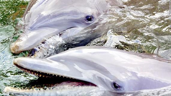 Cá heo chết hàng loạt