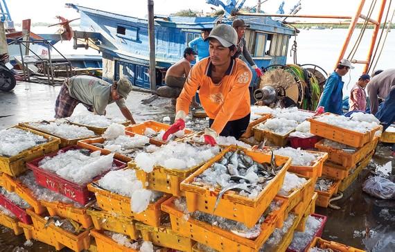 Thủy sản tại cảng Cát Lở (phường 11, TP Vũng Tàu)  